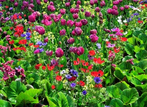 Mixed-Colorful-Flower-Garden