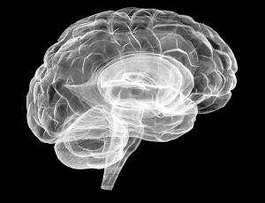 The Brain by Katharine Dowson (2005)