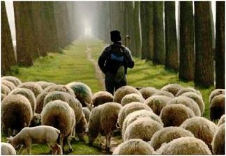 pastoring-sheep